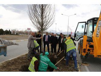 Erzincan Belediyesi Ağaçlandırma Çalışmalarına Devam Ediyor
