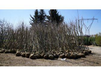 Yeni Mezarlıkta Bahar Hazırlığı