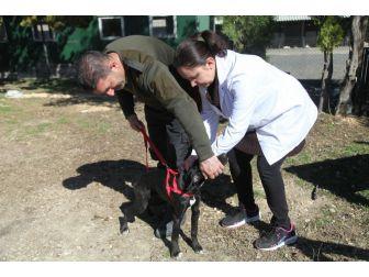 Odunpazarı Belediyesi'nden Ücretsiz Kuduz Aşısı