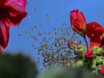 Budapeşte'de Örümcek Yavruları görenleri Hayran bırakıyor