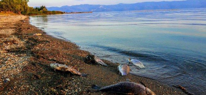 İznik Gölü'ndeki korkutan balık ölümleri