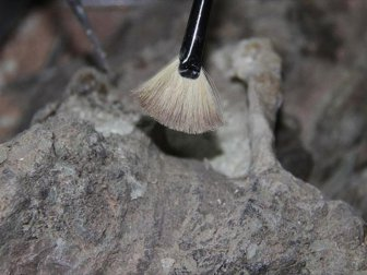 Fas, Yusufiye'de 300 Bin Yıllık İnsan İskeleti Kalıntısı Bulundu