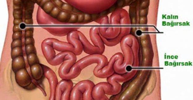 Bağırsaklarınızdan kanser riski yaratan kilolarca atığı temizleyip 10 kilo verdiren tarif