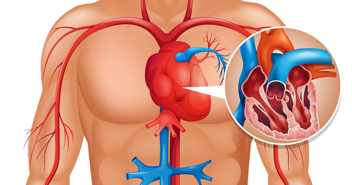 Vücudunuz Kalp Krizini 1 Ay Önceden Haber Veriyor – Dikkat Etmeniz Gereken 6 Belirti