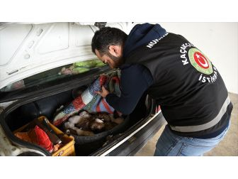 Otomobil Bagajında Yavru Köpekler Yakalandı
