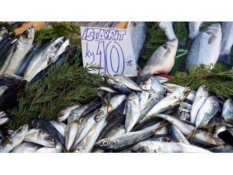 Tezgahlarda Balık Bolluğu