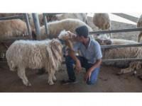 Hayvan Pazarlarında 'Kurban' Hareketliliği