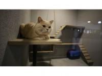 'Lüks Odalı' Kedi Oteli Bayramda Dolu