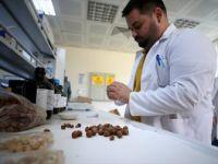 Fındık Atıklarından Kemoterapi İlacı Etken Maddesi