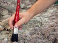 ANU, Bilinen En Eski Hayvan Fosili Bulundu