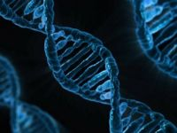 Tüketilen Gıdanın DNA'ya Etkileri Tespit Edildi