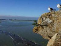 Metcezirin Doğayı Dönüştürdüğü Yer: Mont Saint Michel Yarımadası