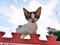 Kentteki Binlerce Kedi 'Miyav Park'ı Sevdi