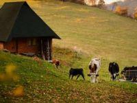 Bosna Hersek'in Başkenti Saraybosna'da Sonbahar Renkleri