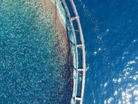 Ortadoğu'nun Balık İhtiyacı Doğu Akdeniz'den