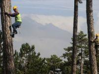 Orman İşçilerinin 40 Metre Yükseklikte Zorlu Mesaisi