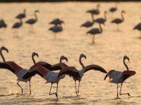 İzmir Kuş Cenneti'nde Gün Batımı