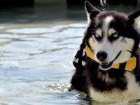 Mersin'de Yaralı Sokak Hayvanlarına Masajlı ve Havuzlu Tedavi