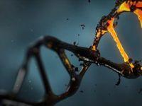 Kanser Hücreleri 'Altının Çekim Gücüne Kapılıyor'