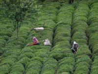 Türk Çayı Geçtiğimiz Yılı Rekorla Kapattı