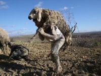Şanlıurfa, Bozova'da Çamura Saplanan Hayvanlar İçin Seferber Oldular