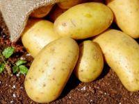 Patates İthalatında Tarife Kontenjanı Açıldı