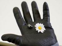 'Sarıçiçek' Adı Verilen Gök Taşının Gizemi Çözüldü