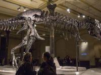 Kanada'da Dünyanın En Yaşlı T-rex Fosili Bulundu