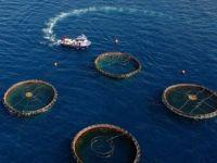 Türkiye'de Su Ürünleri İhracatı Yüz Güldürdü