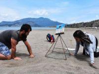 Nesli Tehlike Altında Bulunan Caretta Carettalar İlk Yumurtalarını Bıraktı