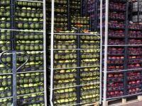 Türkiye'den Yaş Meyve Sebze İhracatında Rusya Lider