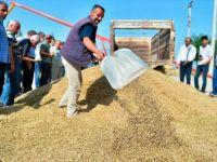Mardin'de Sezonun İlk Arpa Hasadı Yapıldı