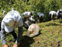 Sigortalı Fındık İşçileri Hasat İçin Bahçeye Girdi