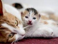 Hayvansever Osman Kaplan Ofisini 'Anne Adayı' Kedilere Tahsis Etti