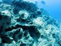 Akdeniz'in Derinliklerindeki Tarihi Neptün Amforaları