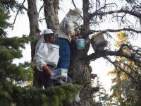 Toros Dağları'ndaki 'Organik Bal' Üç Arkadaşın Geçim Kaynağı Oldu
