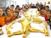 Anadolu Doğa Tarihini Milyon Yıllık Fosillerle Öğreniyorlar