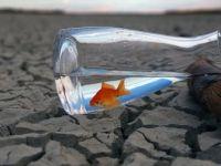 Doç. Dr. Hepcan: 'Dünya İklim Değişikliğine Ayak Uyduramıyor'