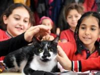 Minik Öğrencilerin Okulu Sahipsiz Kediye Yuva Oldu