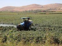 Yağan Yağmurlar GAP Çiftçisine 'Nefes' Aldırdı