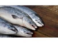 Küresel Isınma Sofradaki Balık Çeşitliliğini Tehdit Ediyor