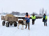 Besiciler Kar Üstünde Kızak ve Eşek Arabasıyla Yem Taşıyor