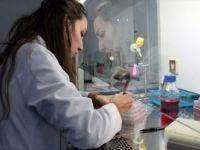 'Sığırların Viral Diyaresi' Hastalığına Karşı Yerli Aşı Geliştiriliyor