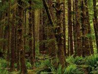 Antarktika'da 90 Milyon Yıl Önce Yağmur Ormanı Olduğuna Dair Kanıt Elde Edildi