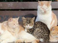 Bakanlık  Salgın nedeniyle Aç kalan sokak hayvanları için harekete geçti!