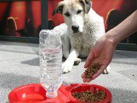 Sokak Hayvanları Aç Kaldı Bakanlık Genelgeyle Herkesi Uyardı