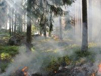 Tiktok İçin video hazırlayan Şahıs Ormanı Yaktı!