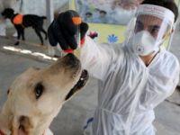 İran'da Köpekler Koronavirüsü Teşhis Etmek İçin Eğitildi
