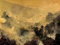 Dünya Genelinde 2019'da Yaklaşık 12 Milyon Hektar Ormanlık Alan Yok Oldu