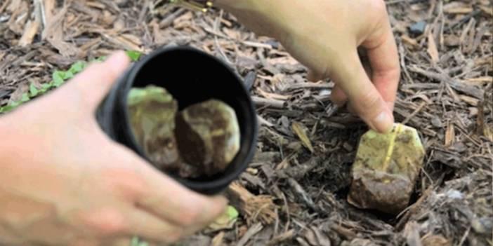 Sallama Çayı Çöpe Atmadı Bahçesine gömdü Nedenini Öğrenince Sizde yapacaksınız